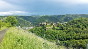 Rheinfels mit Weingärten