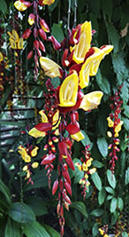 Pflanze Hortus Botanicus Leiden - Botanischer Garten