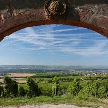 Eltville am Rhein Wanderung durch den Weinberg, dem historischen Steinberg