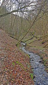 Traumschleife Rundwanderweg Fünfseenblick durch den Wald mit Bach