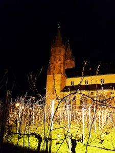 Liebfrauenkirche in Worms mit Weingarten Liebfrauenmilch